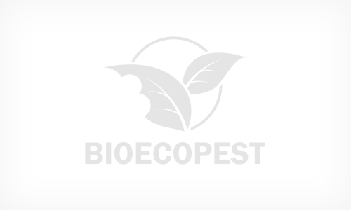 Award for Bioecopest at the Biochem Accelerator Forum, Frankfurt 2012